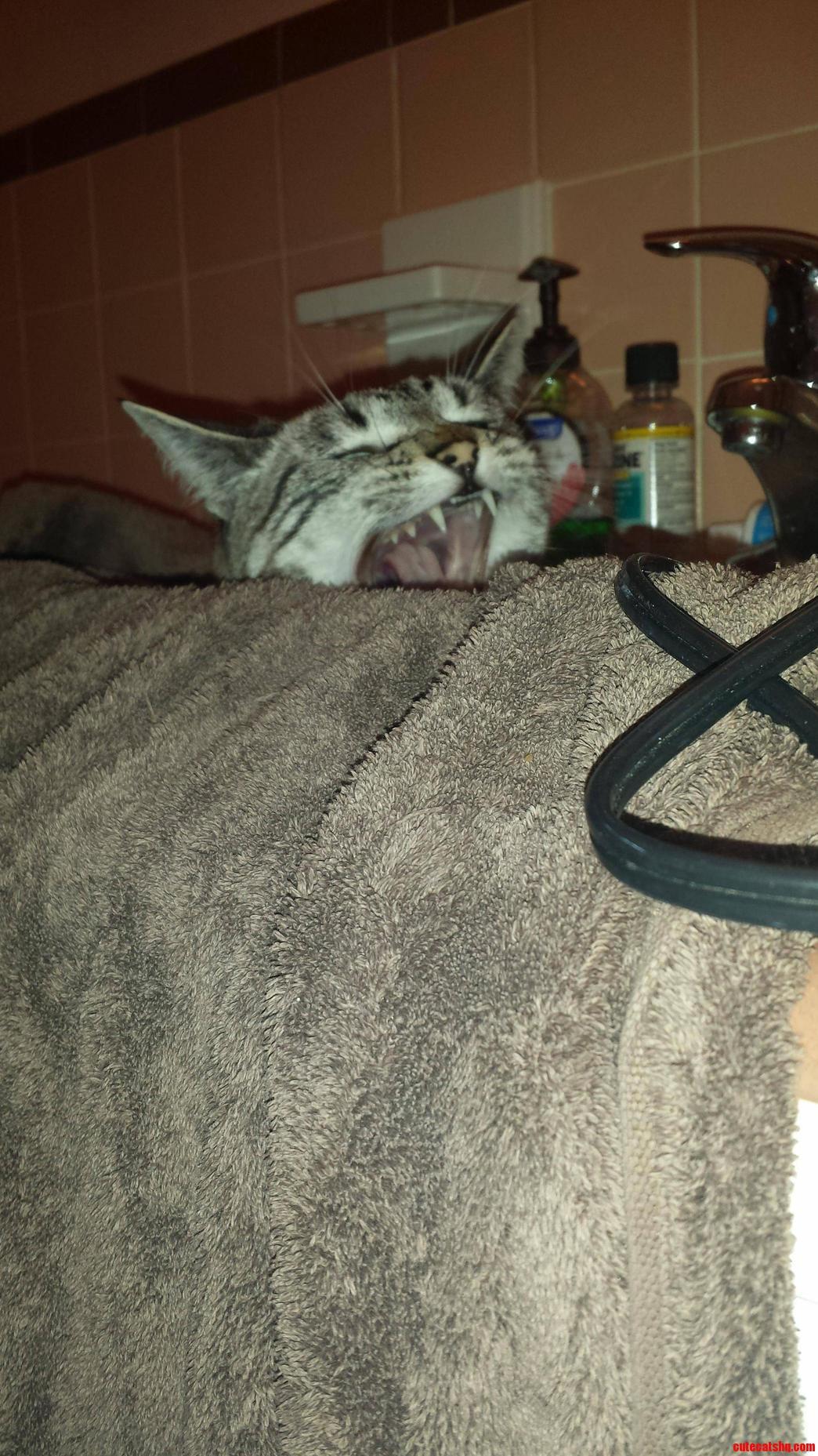 My Cat Lynka Loves The Sink.
