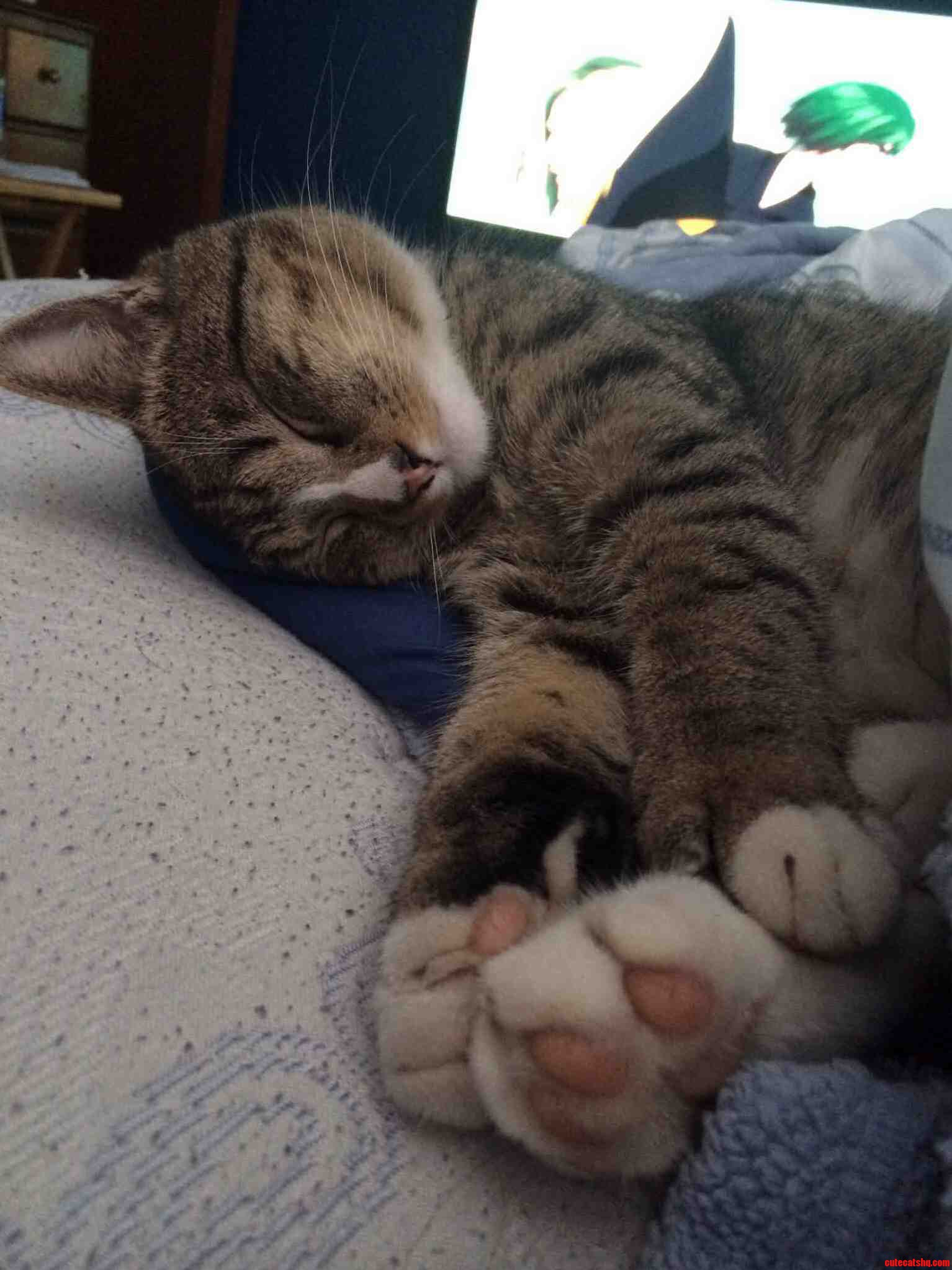 My Cat Wumbles Loves To Hold His Feet When He Sleeps.