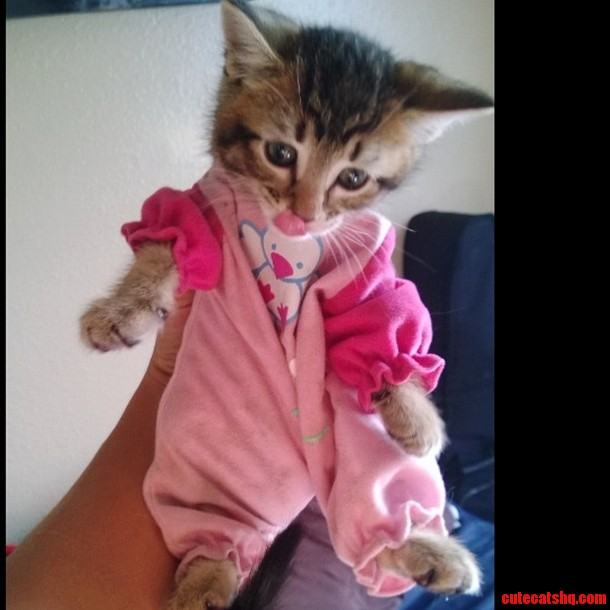 My Kitty In A Toys Outfit -