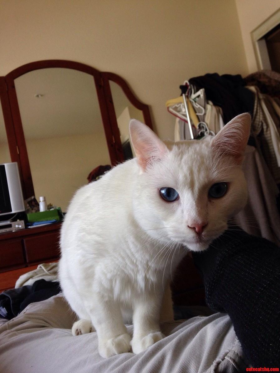 My Little Blue Eyed Furball