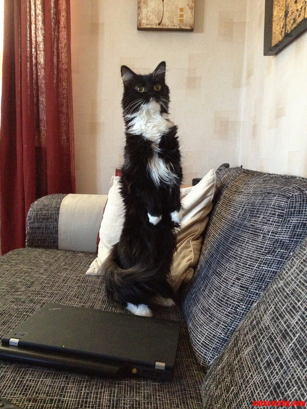 My Little Girl Myran Standing On Her Hind Legs.