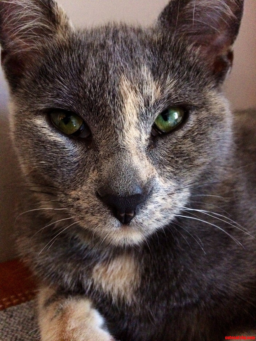 My Manx Cat. My Best Friend. I Present To You Tiggy.