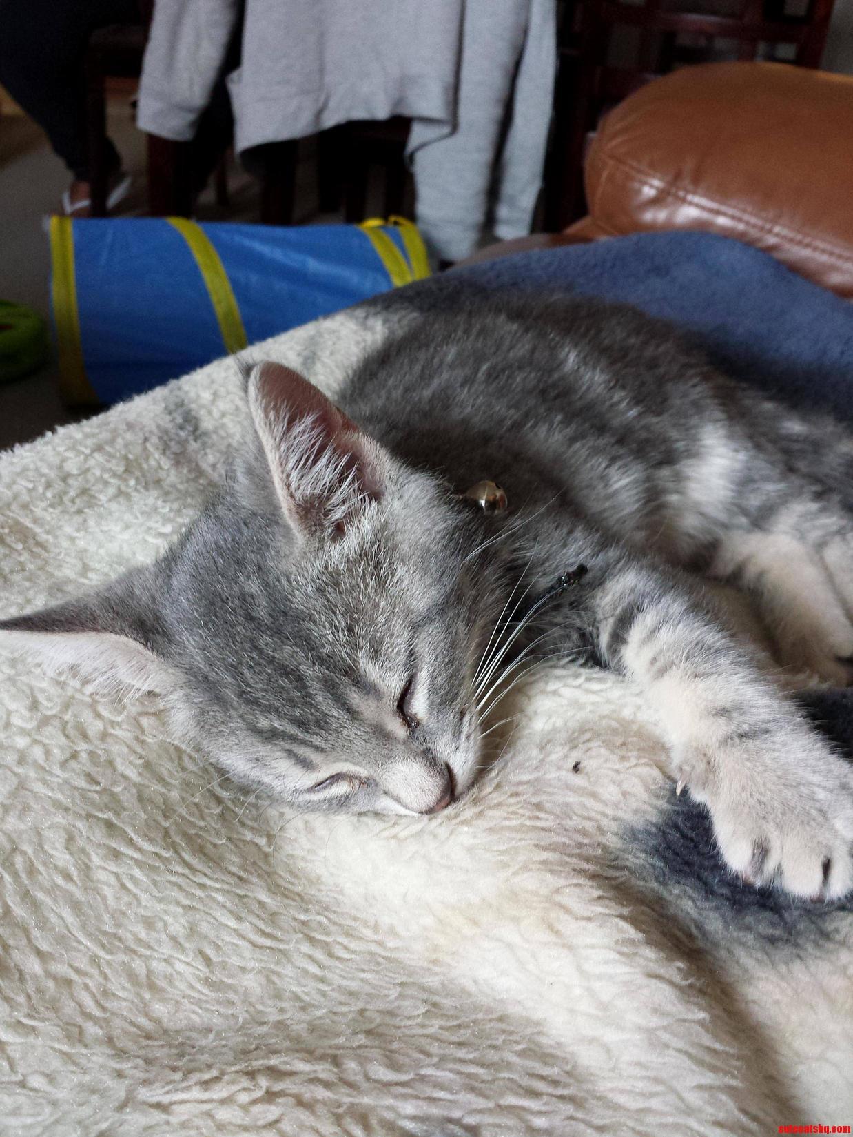 My Mom Got A New Kitten And He Belongs Here. Meet Hutch.