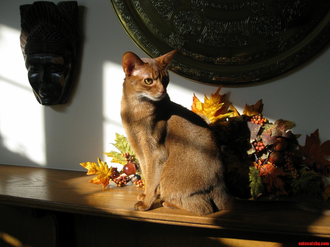 My Mother Really Wants To See This Picture She Took Of Her Abyssinian. This Is Josie.