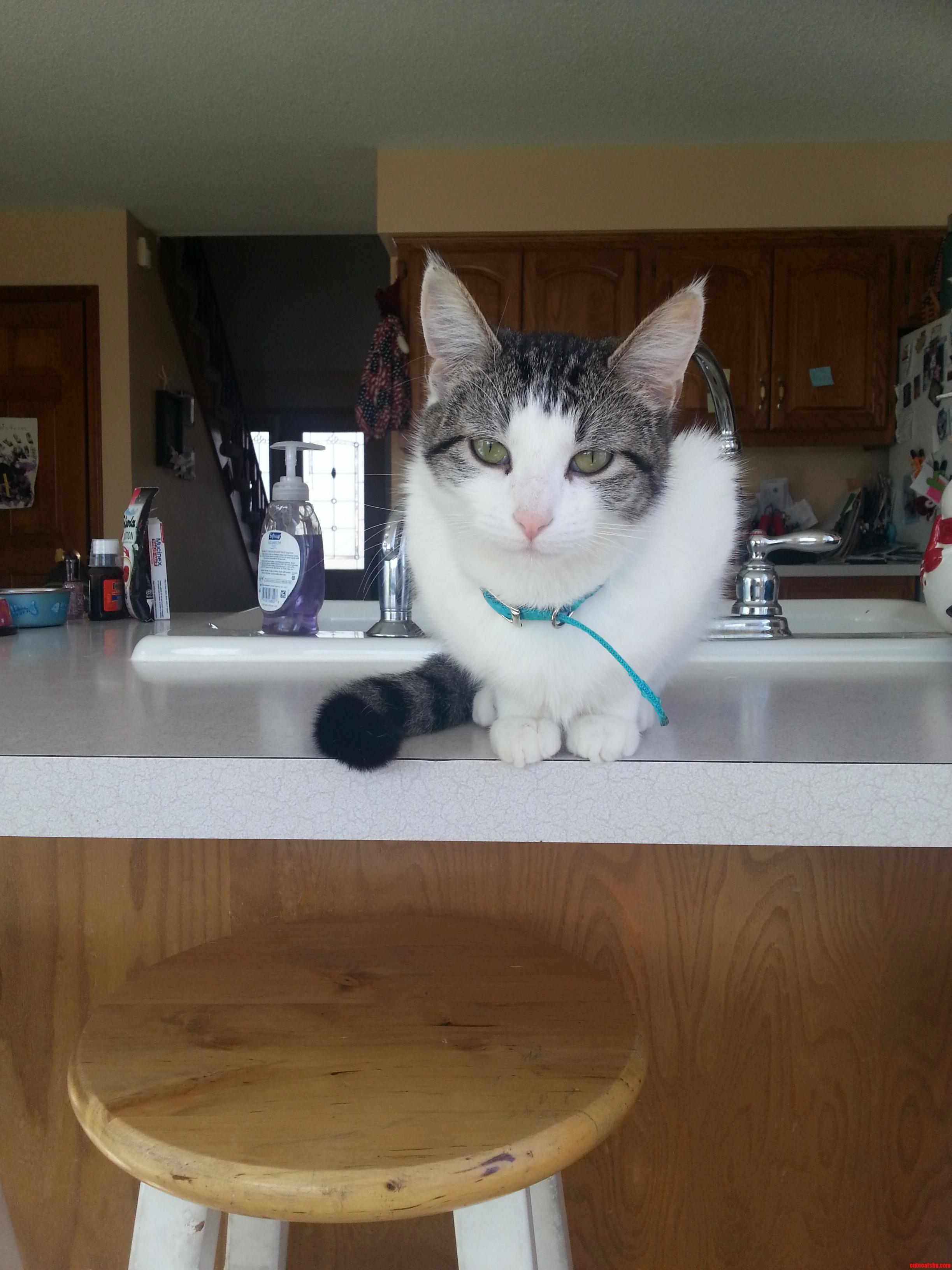 My New Kitty Annie.