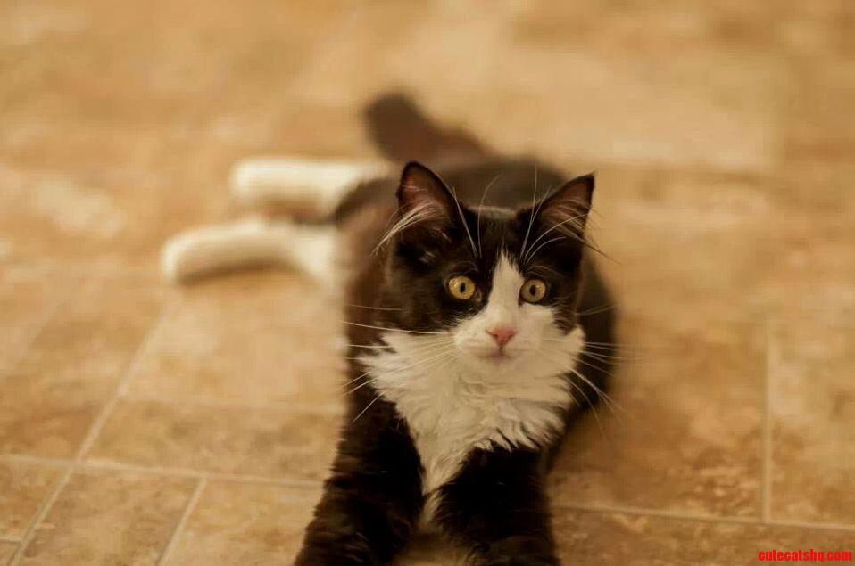 My Tuxedo Kitty. Princess Penelope.