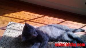 Nala Relaxing In The Sunlight