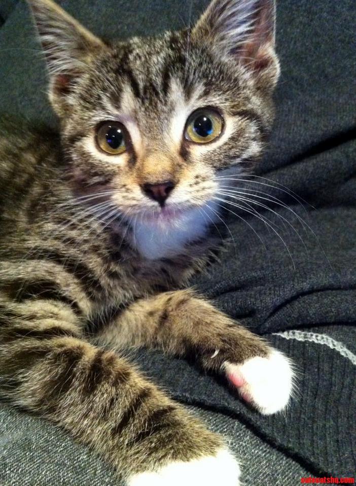 Name My New Kitten