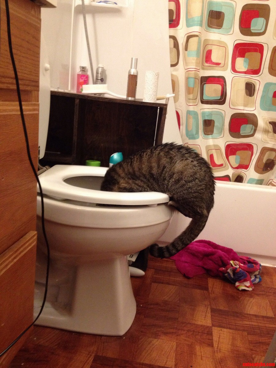 Okay So My Cat Drinks Out Of The Toilet And I Dont Think Thats What Normal Cats Do.