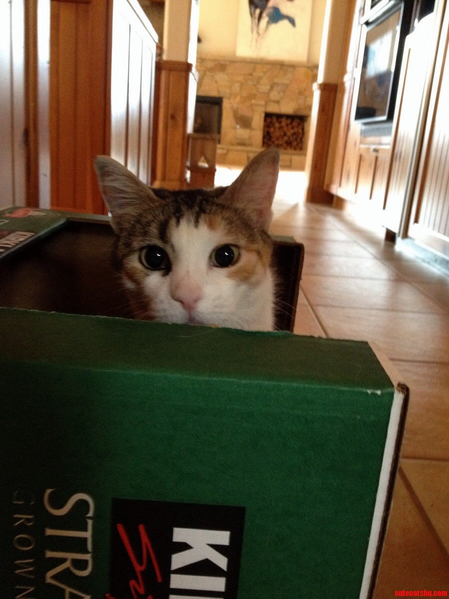 Peanut Showing Off Her New Box