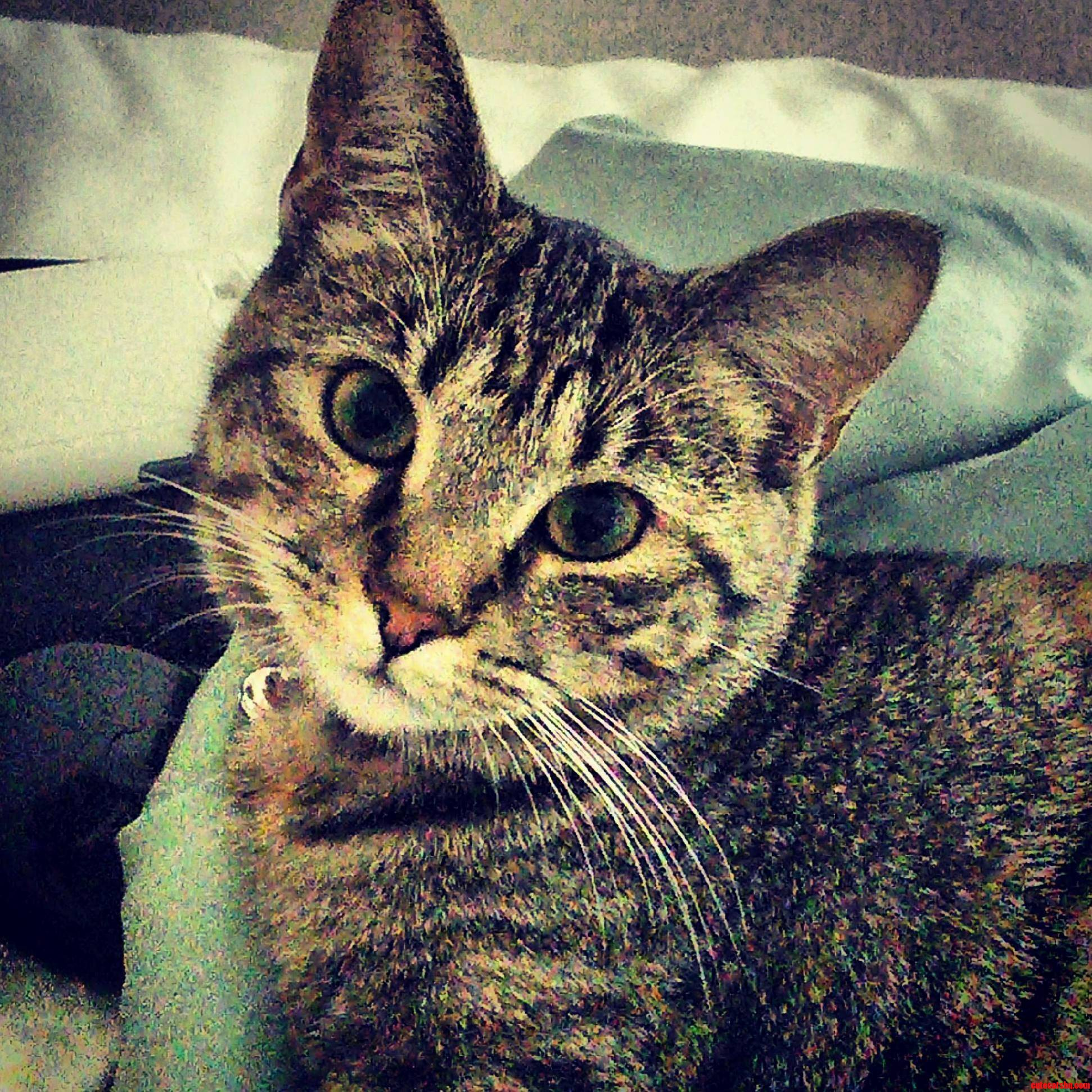 Penny Aka Devil Kitty
