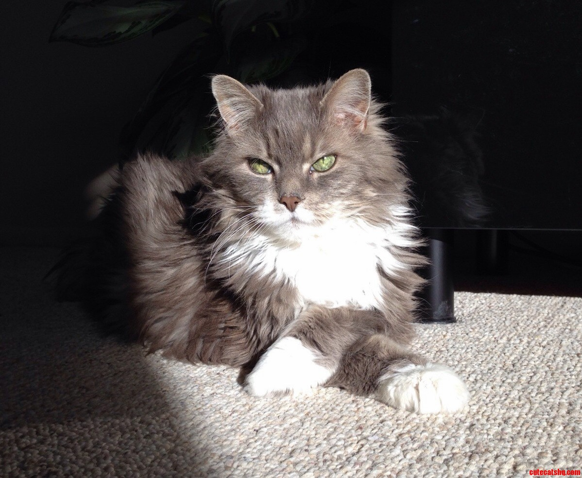 Remember Pearl The Goggles-Wearing Cat Here She Is Without Goggles Enjoying A Sunbeam Today.