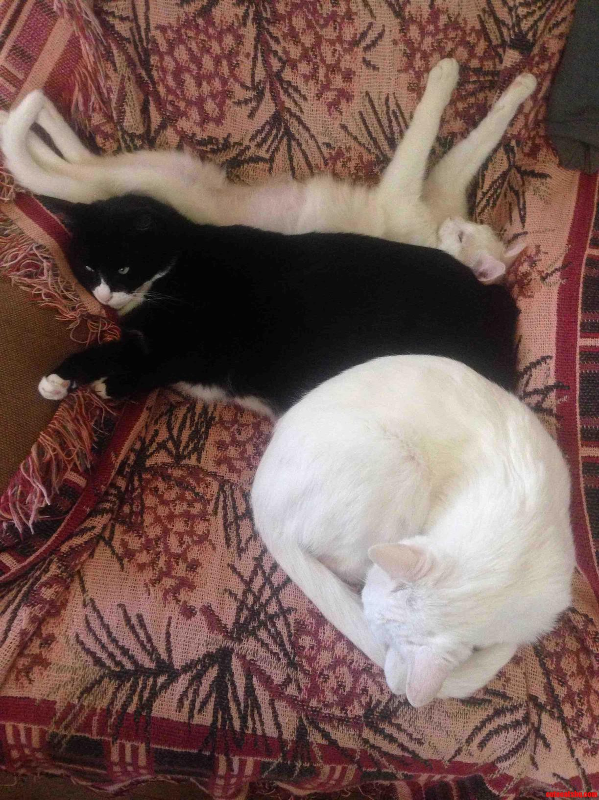 Reverse Oreo Cat Sammich