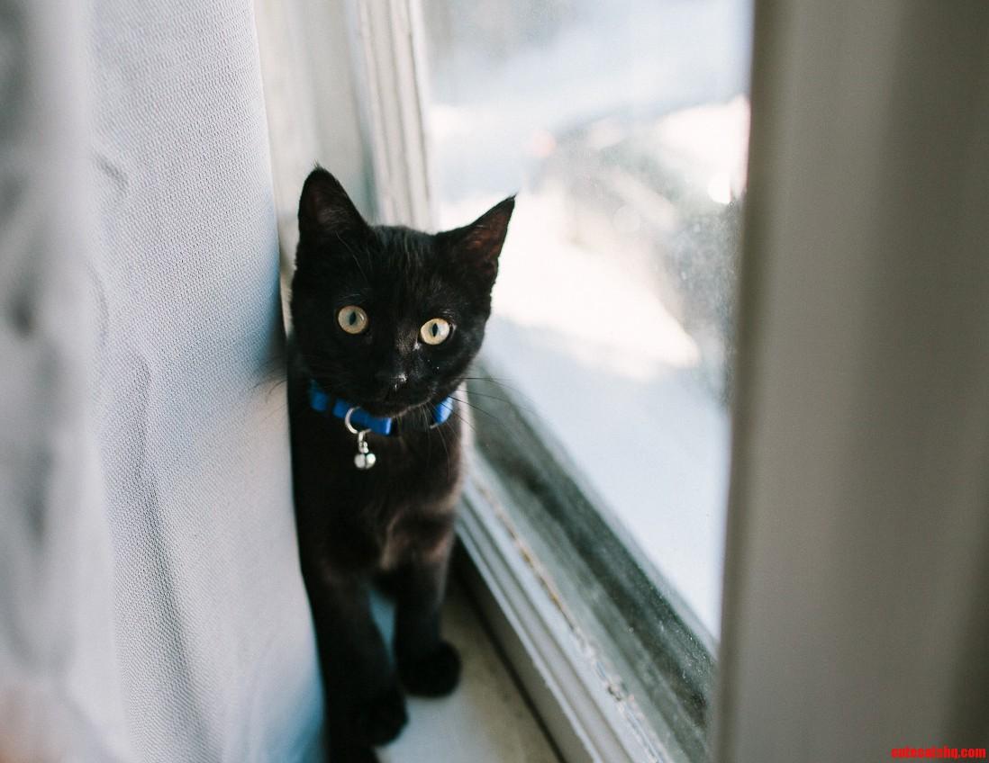 S Loving Black Cats Lately – So Heres Bugaboo