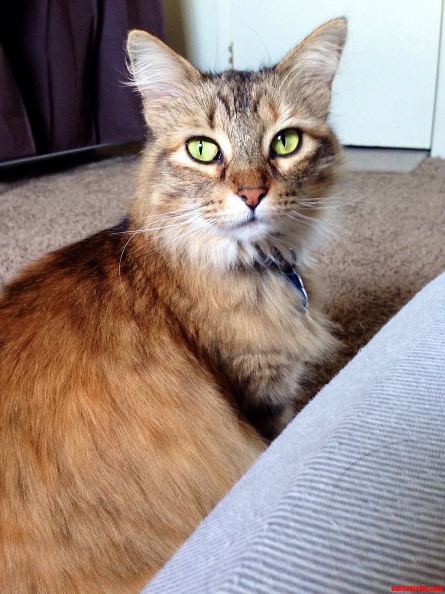 She Was Abandoned By Her Owner Two Years Ago. We Were More Than Happy To Give Her A Good Home