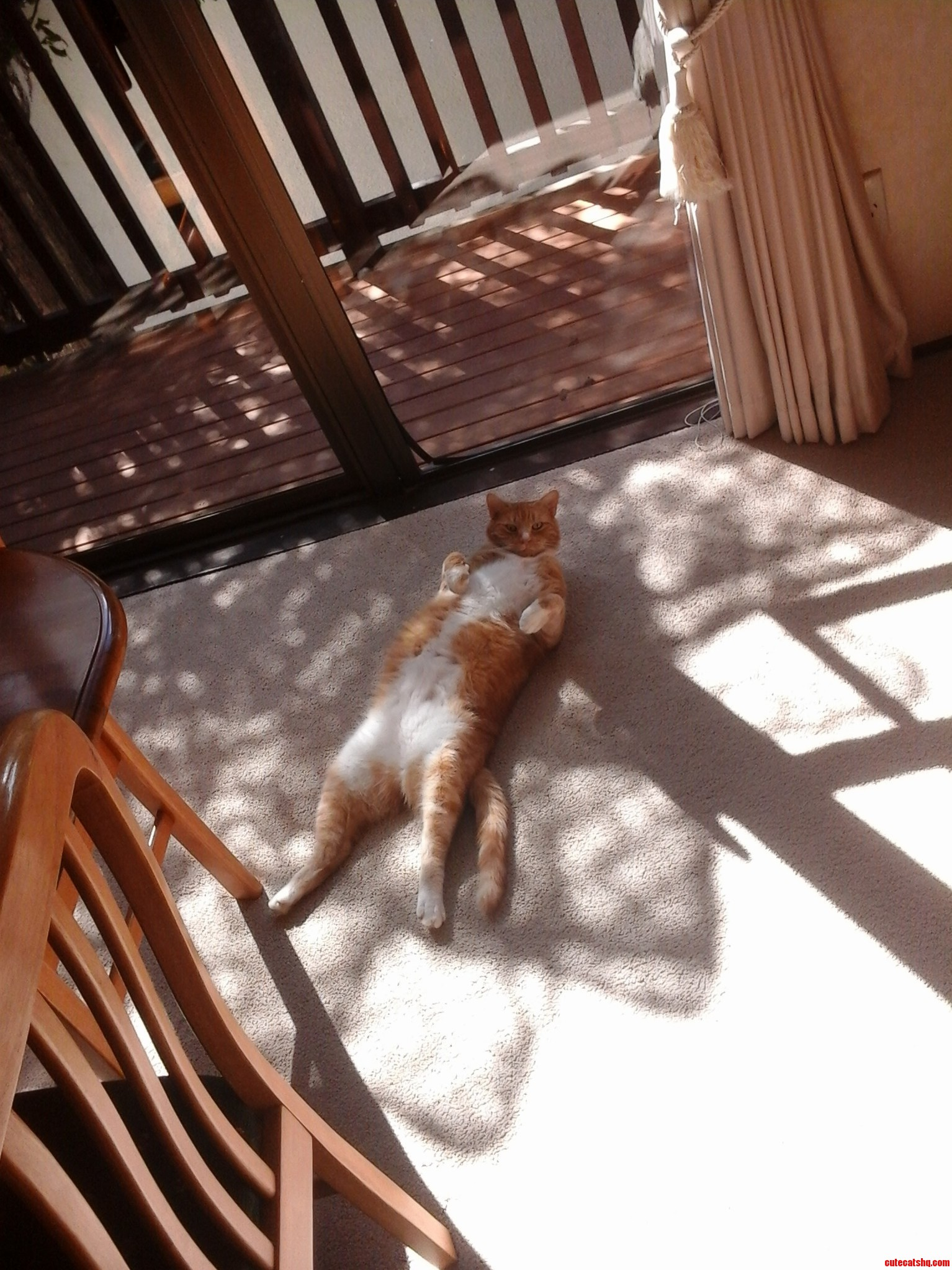 Sisters Cat Shanks Loves Sleeping On His Back