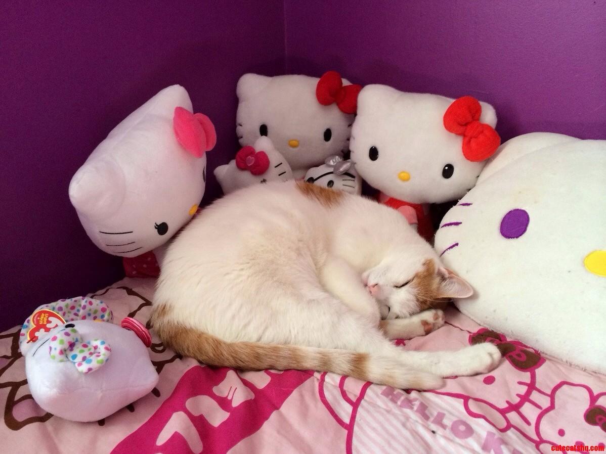 Sleeping With The Kitties