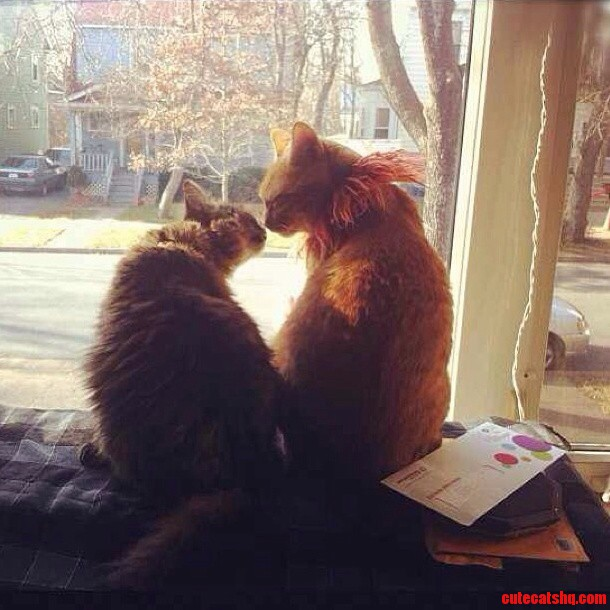 Snuck A Pic Of The Cats On Valentines Day.