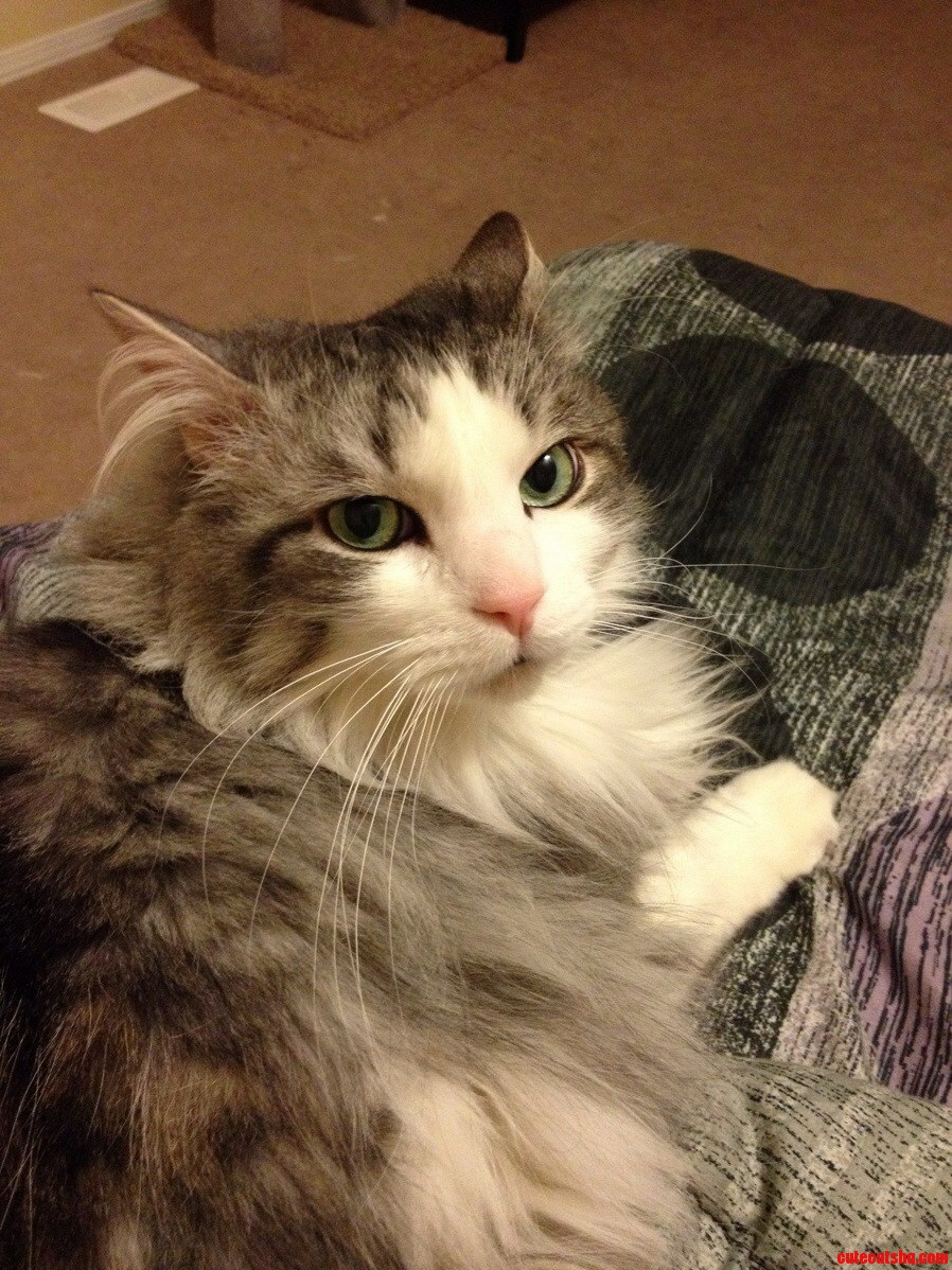 Snuggle Cat | Cute cats HQ - Pictures of cute cats and ...