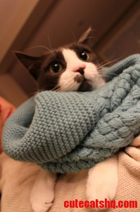 Such Style Fashion Cat Wearing Infinity Scarf.