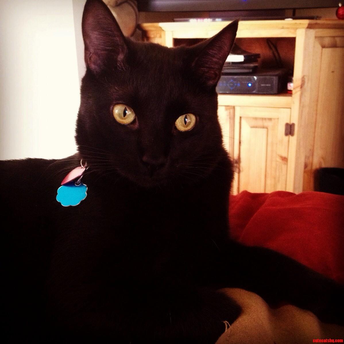 The Black Cookie. Aka Newton