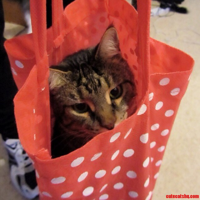 The Cat Is Not Out Of The Bag Just Yet.