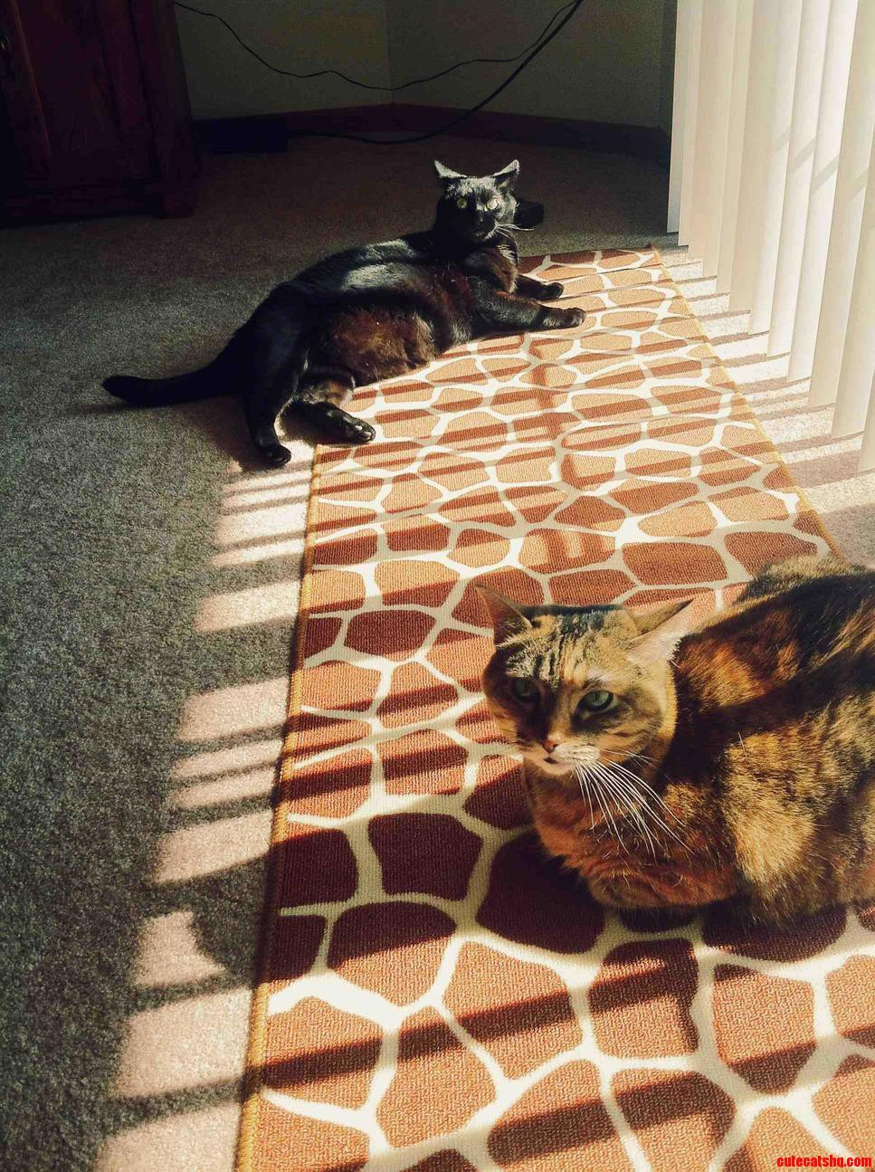 They Take Every Chance They Get To Sunbathe.