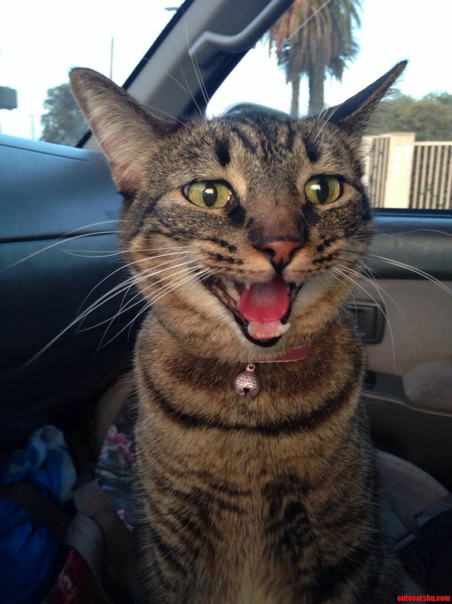 This Is Bobbi Puma Panting During A Car Ride