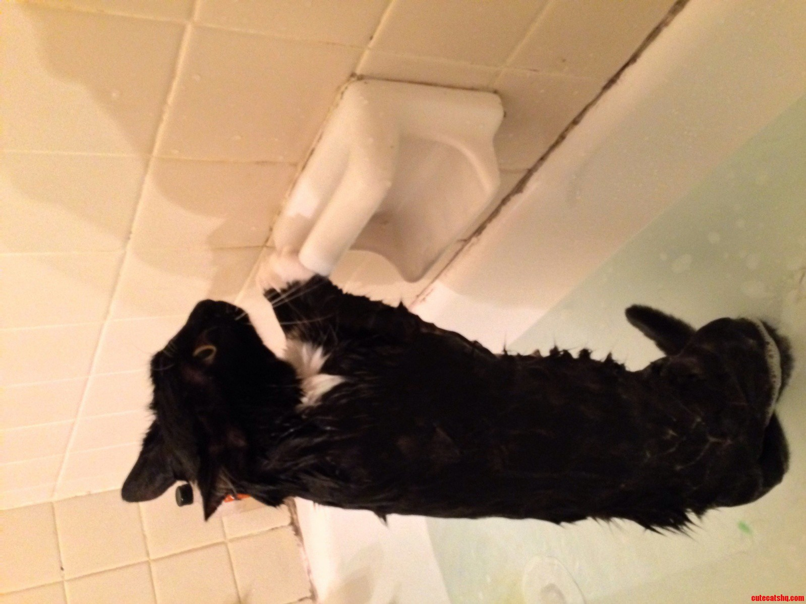This Is How My Cat Gets His Bath. He Stays Like This And Prays For It To End.