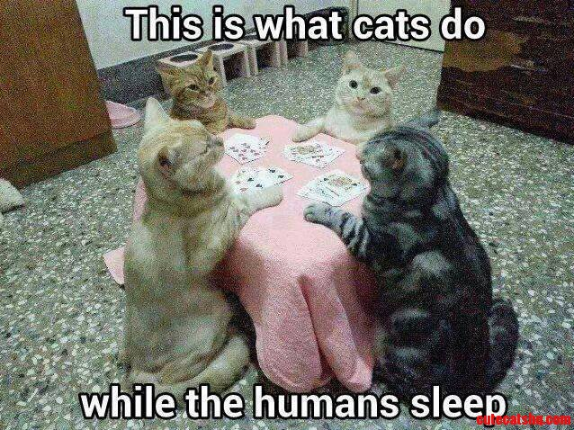 This Is What Cats Do…While The Humans Sleep