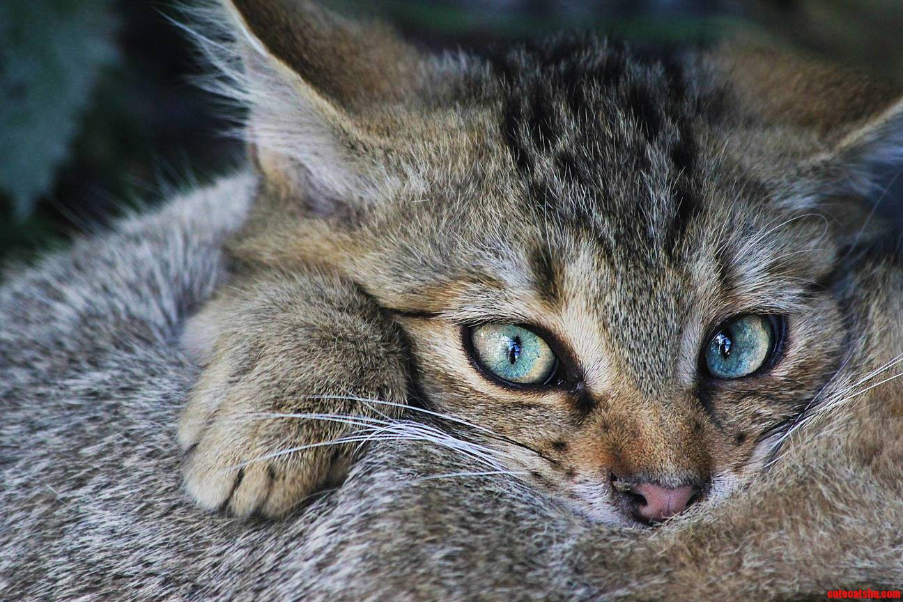 Well This Is A Wildcat Belongs Here Too