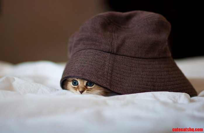When I Was Playing Hide And Seek With My Cat
