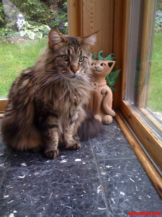 Which Is The Real Cat