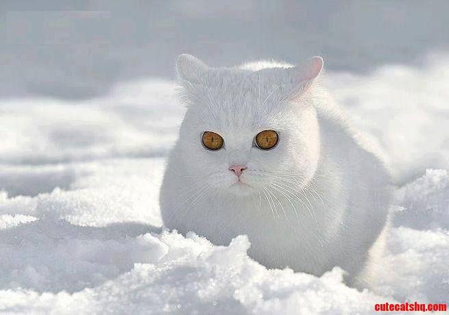 Whiter Then White Too White Cat