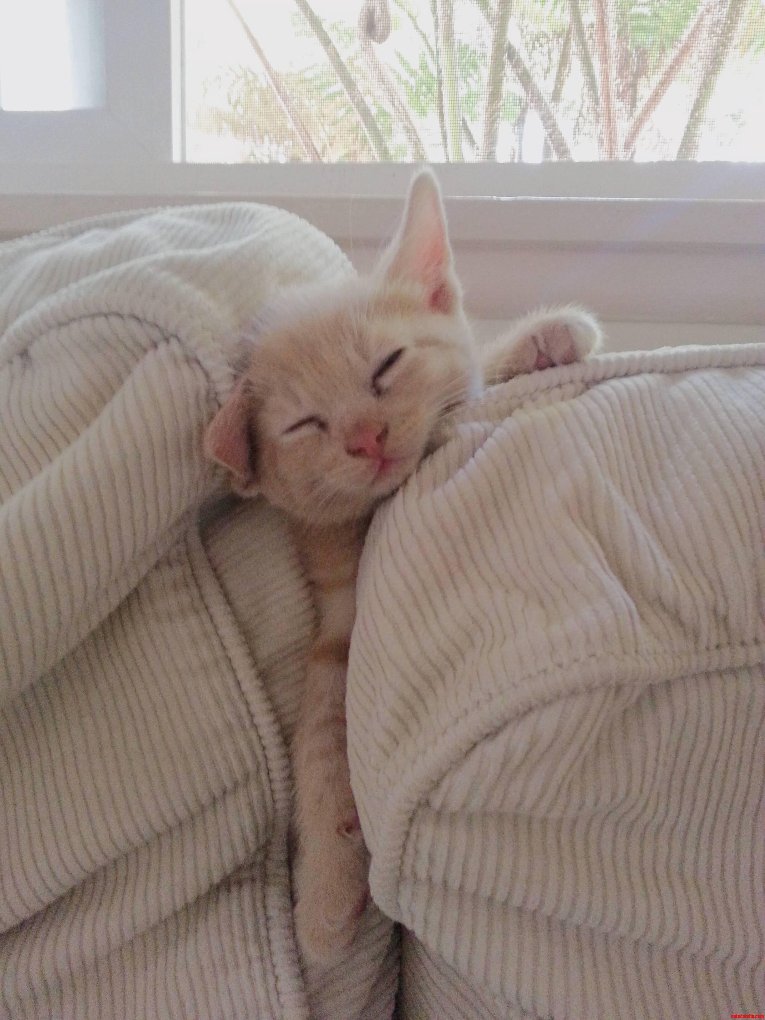 Wish I Could Sleep Like This.