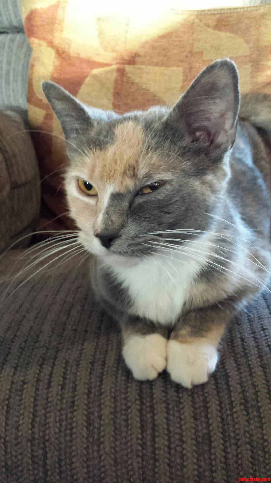 Another One Of The Sassy Miss Whisper