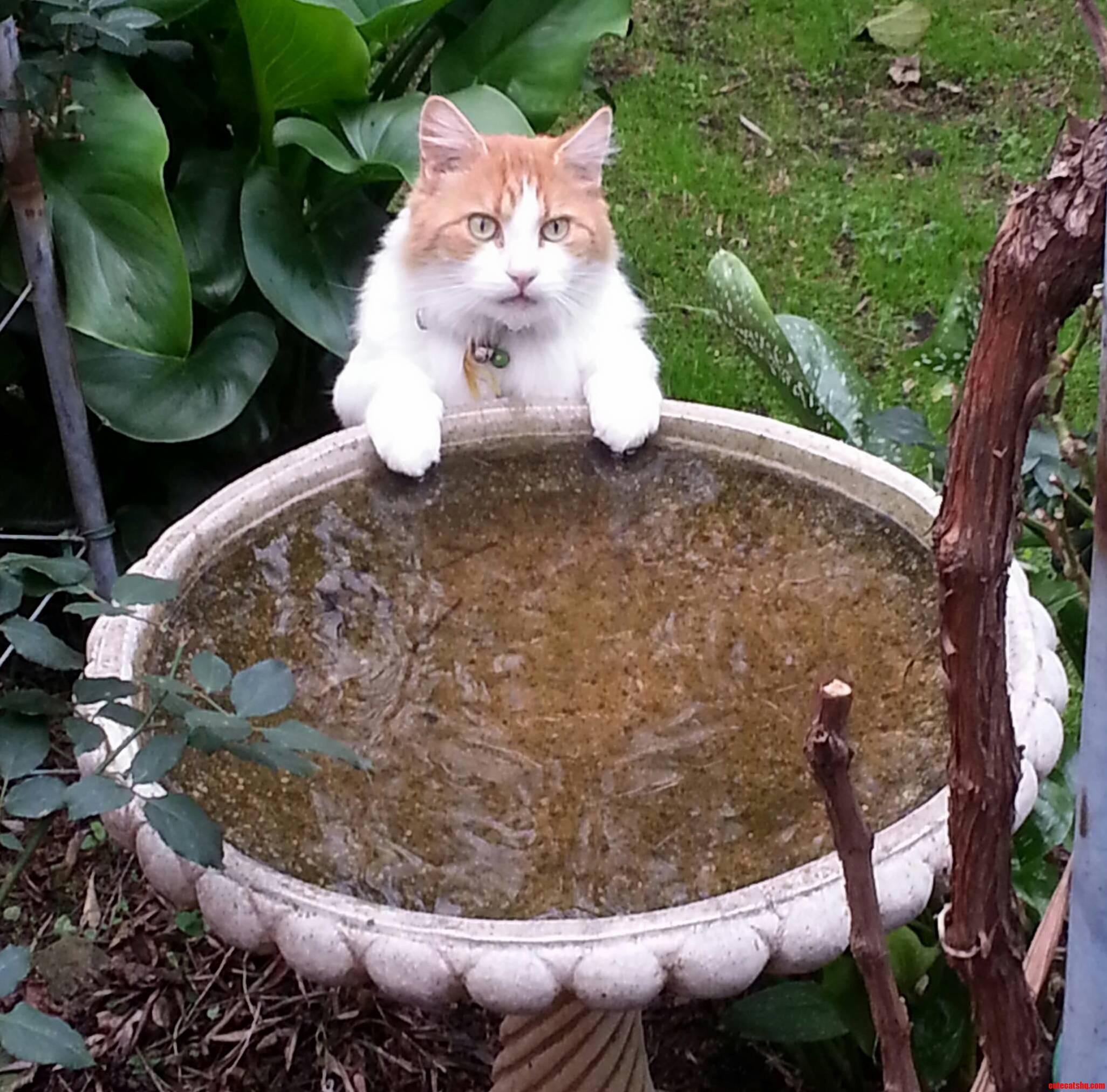 Barney At The Bird Bath