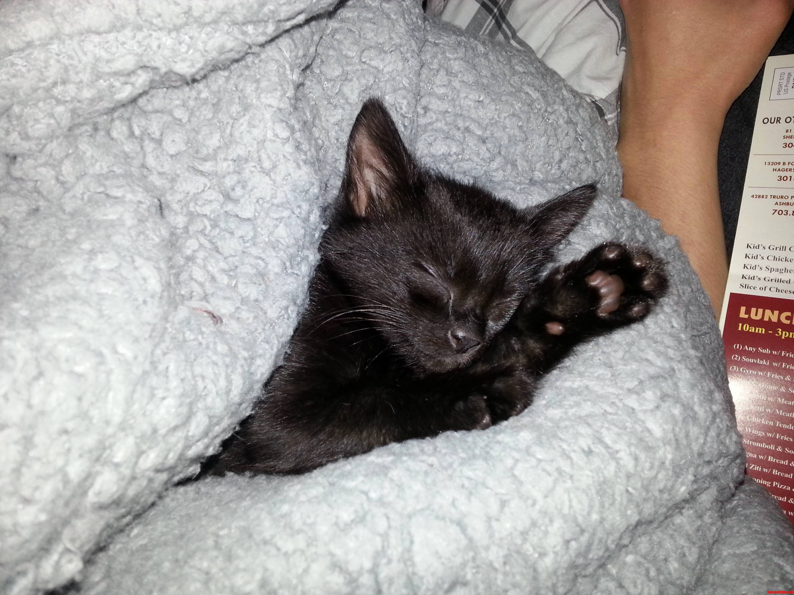 Black Cat Friday Wake Me When Its Caturday Plz