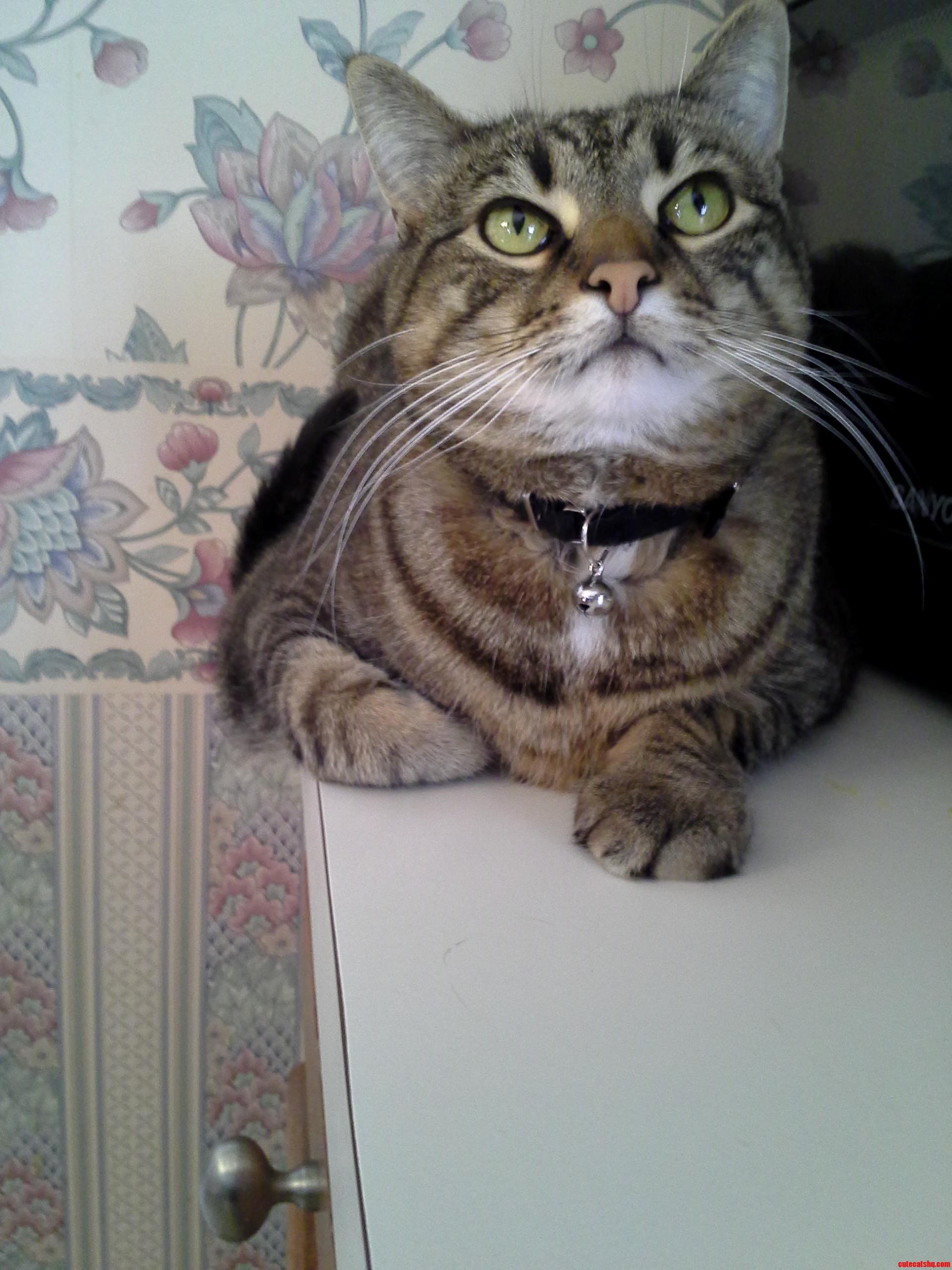 Dem Whiskers.