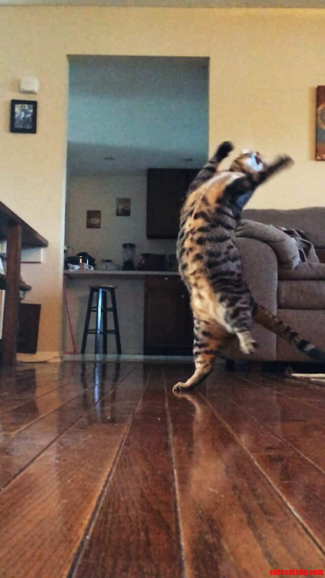 Do Not Try To Stop Me… I Must Dance