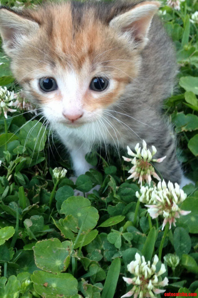 First Time In The Grass