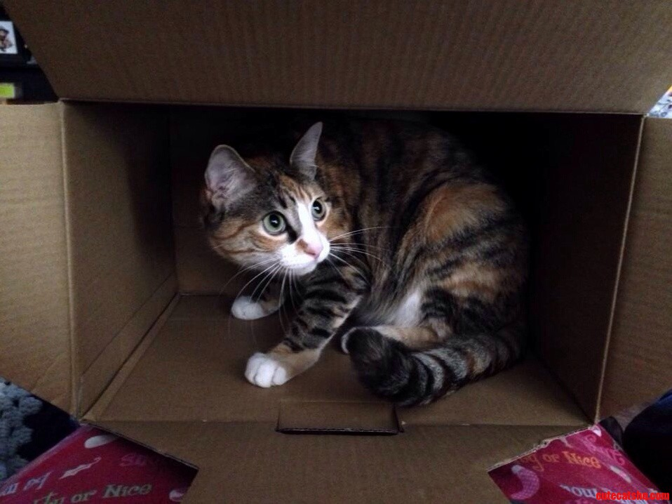Happy 1St Birthday To My Baby Kitty Phoebe