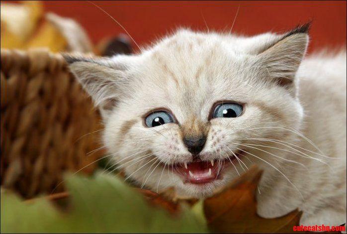 Happy Caturday Everyone