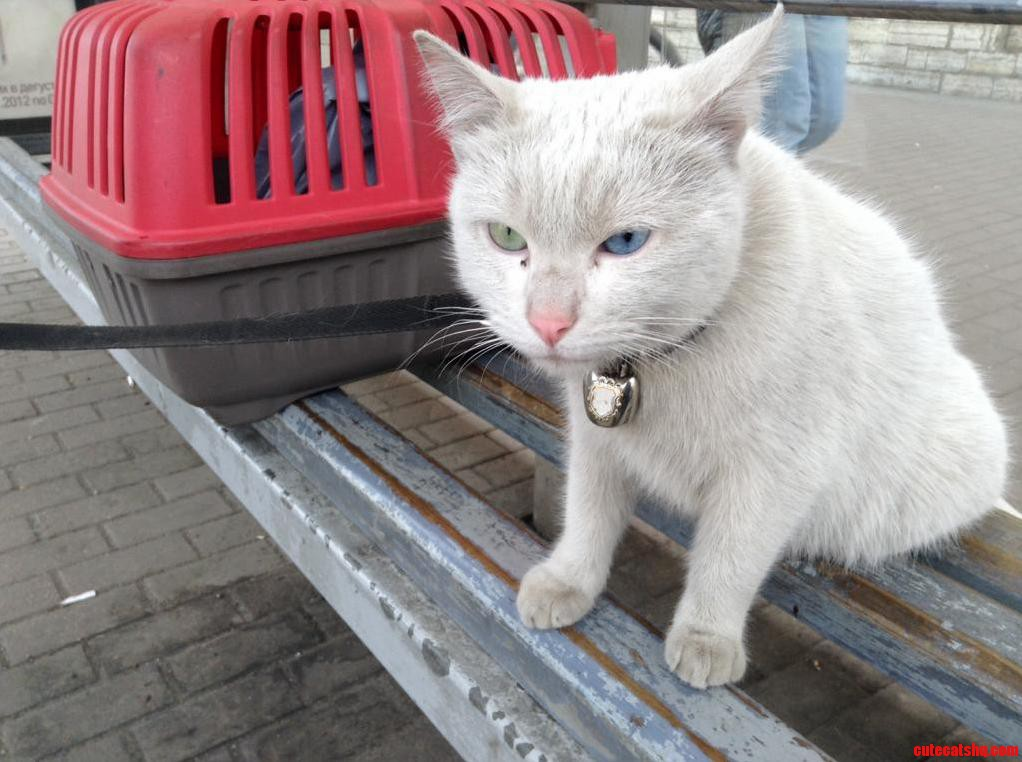 I Met Kuzma On The Bus Stop He Was Taking A Walk With His Owner. Incredibly Cute
