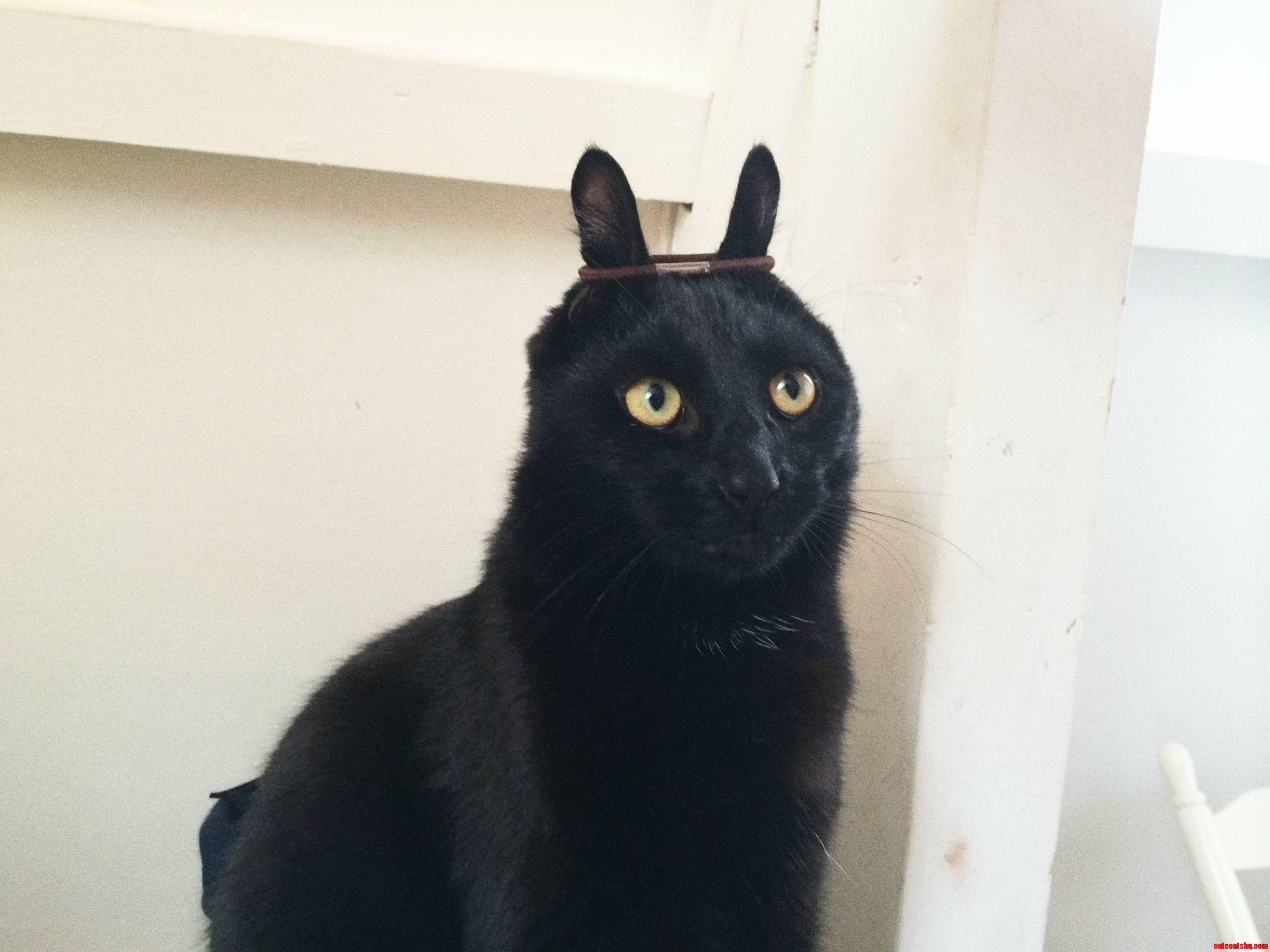 Йога, черный кот картинки прикольные смешные