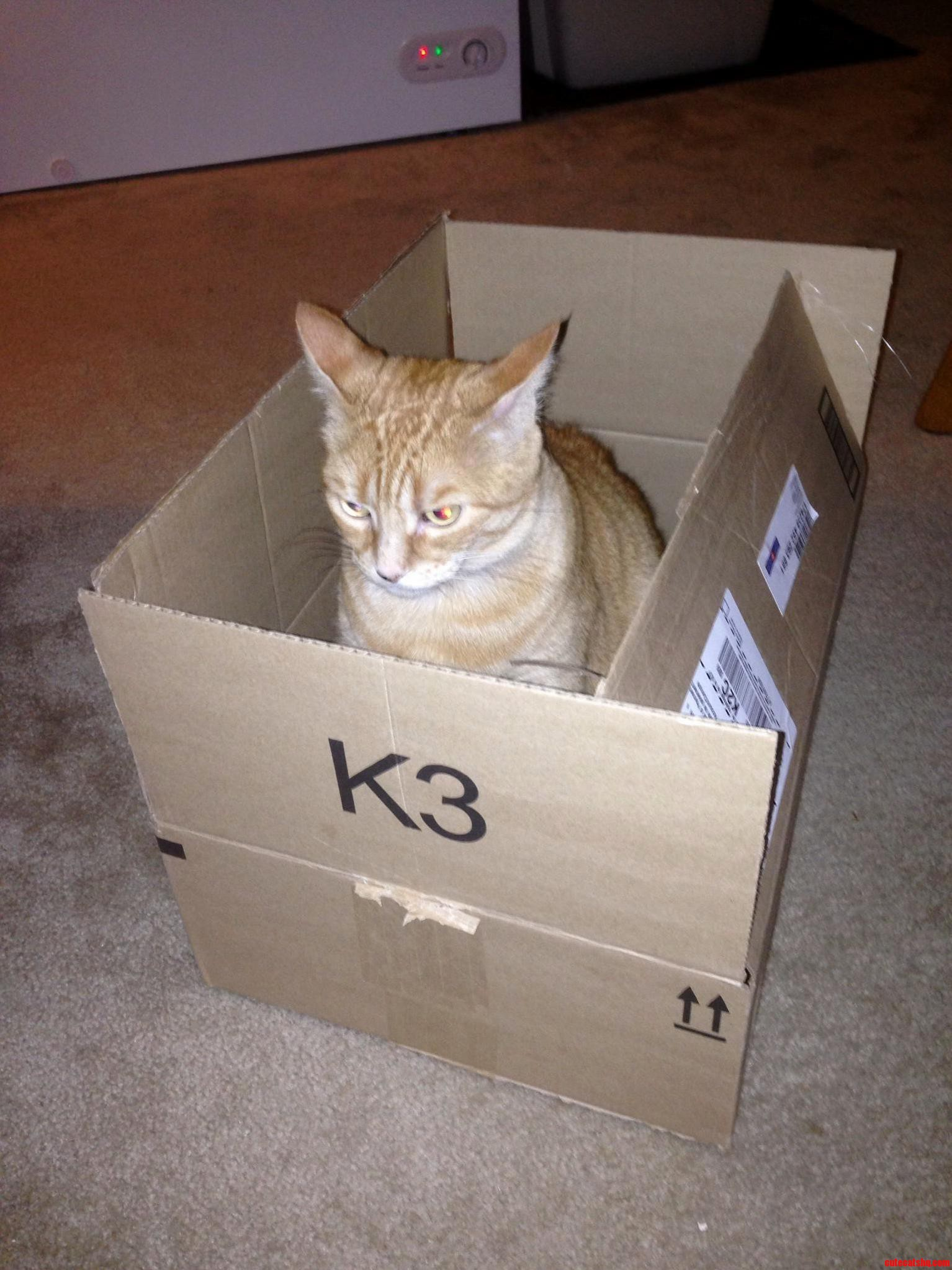 I Thought Cats Like Boxes