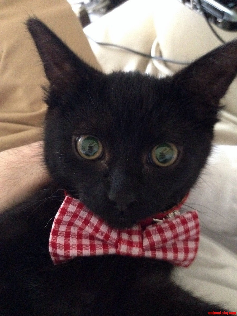 Its Black Cat Friday Mum Bought Ned A Bow Tie. Hes Been Very Pleased With Himself Today.