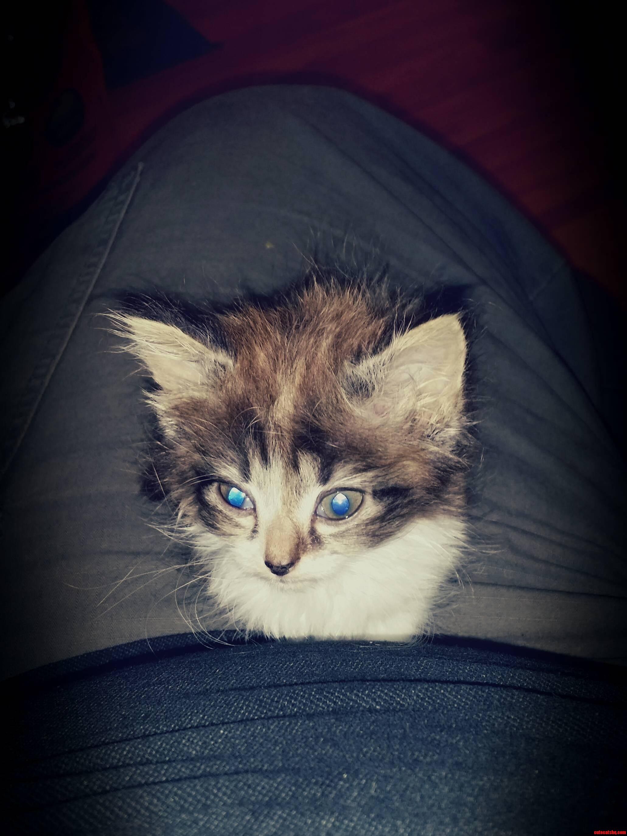 Just Got A Kitten. Name Her