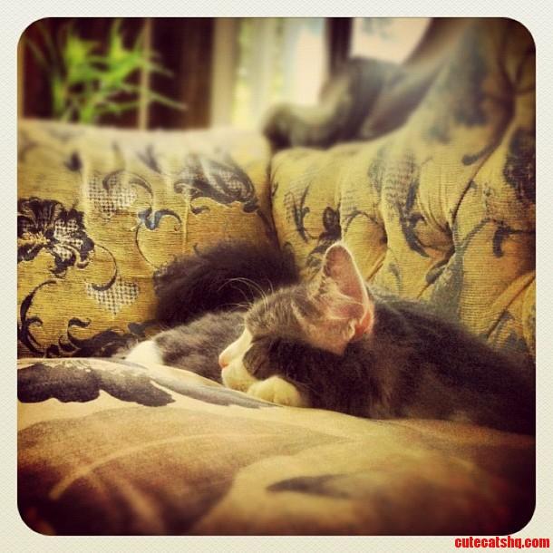 Keeping His Naps Classy.