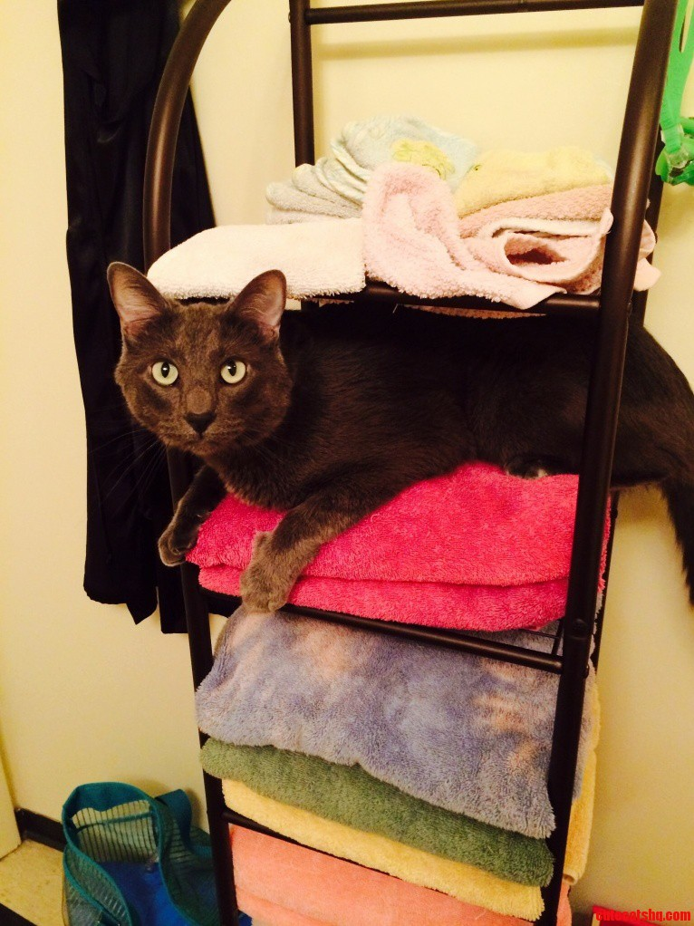 King Of The Towel Rack. I Ll Air Dry Today.